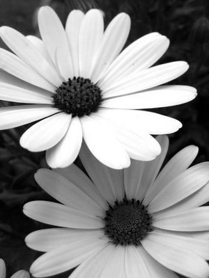 black and white flowers. failures. .